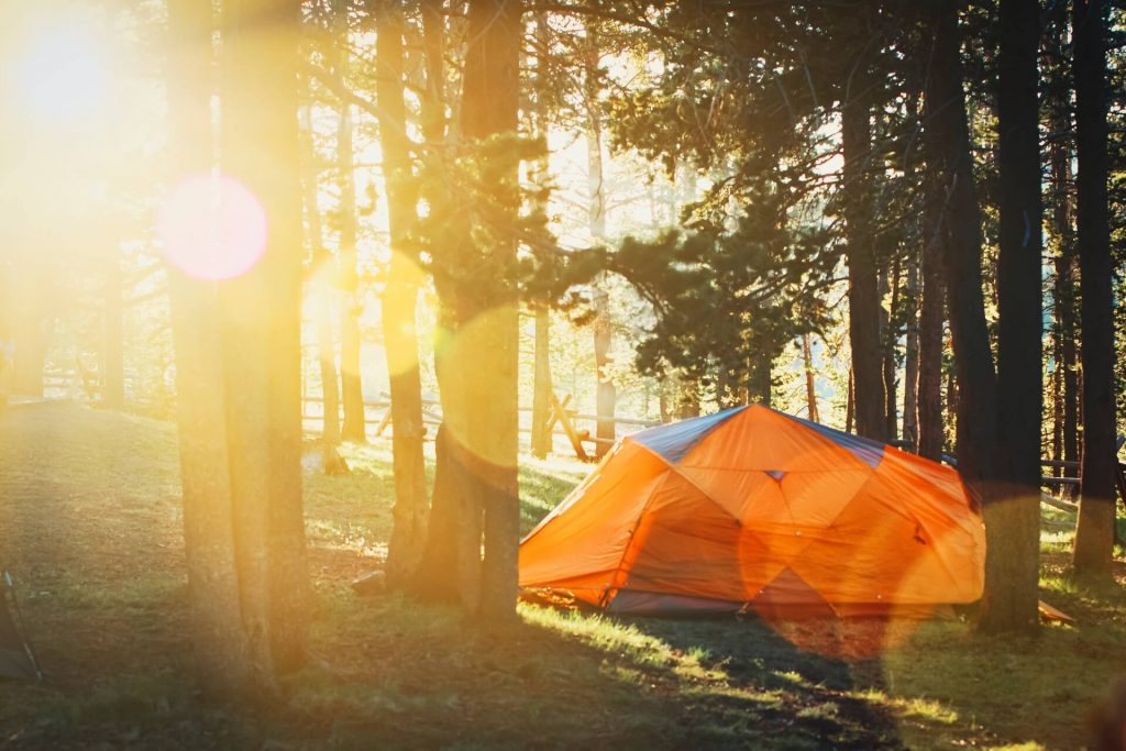 Camping tent near trees in forest with sun shining